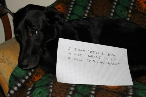 dogshaming garbage