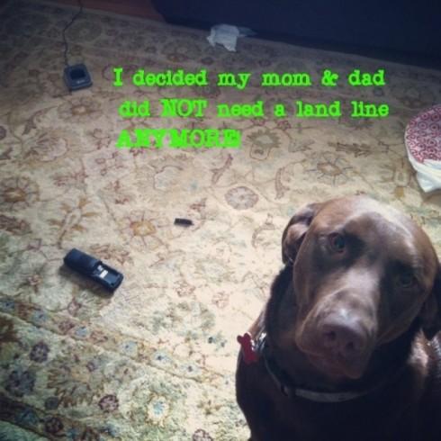 dogshaming landline