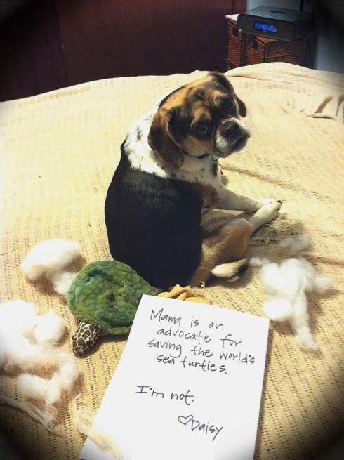 dogshaming sea turtles