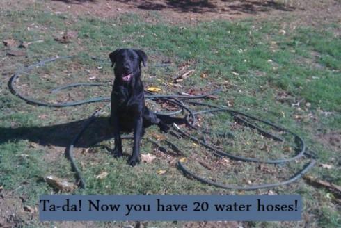 Zig-VS-water-hose-637x427